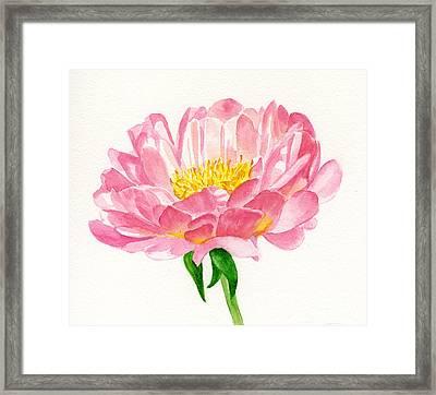 Peach Colored Peony Blossom Framed Print by Sharon Freeman