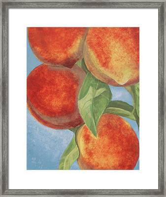Peach Pizazz Framed Print by Debora Baxter Jackson