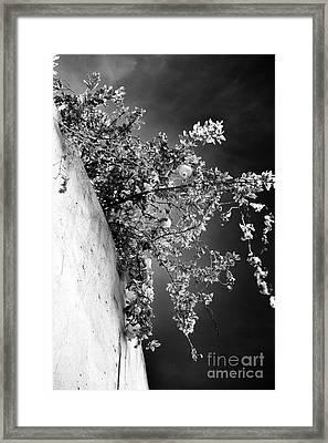 Peaches In Lisbon Framed Print by John Rizzuto