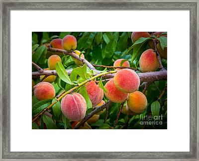 Peaches Framed Print by Inge Johnsson