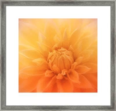 Peachy Dahlia Framed Print by Kim Hojnacki