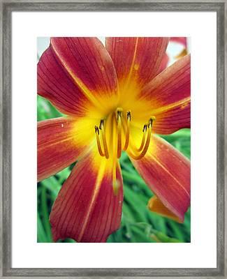 Peachy Framed Print by Mike Podhorzer