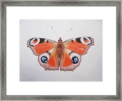 Peacock Butterfly Framed Print by Ele Grafton