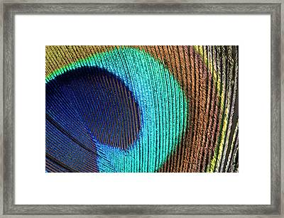 Peacock Feather Abstract Framed Print by Nigel Downer