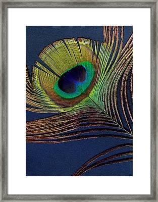 Peacock Feather Framed Print by Ann Powell