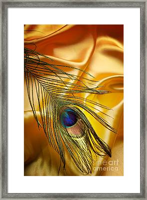 Peacock Feather Framed Print by Jelena Jovanovic