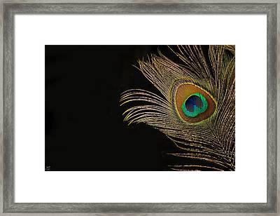 Peacock Feather Still Life Framed Print by Lisa Knechtel