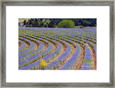 Peaking Framed Print by Bob Phillips