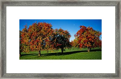 Pear Trees In A Field, Swiss Midlands Framed Print by Panoramic Images