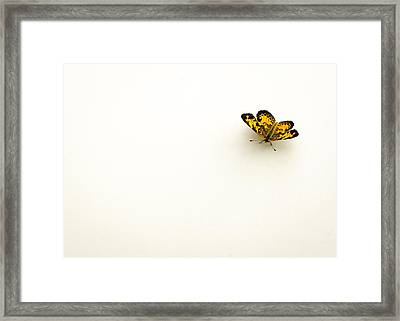 Pearl Crescent Spot  Framed Print by Heather Applegate