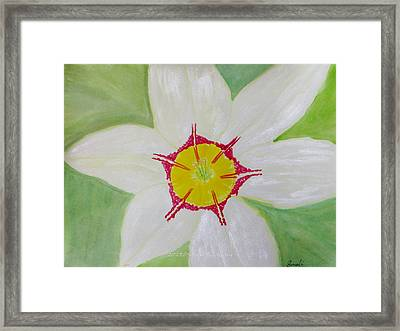 Pearl White Flower Framed Print by Sonali Gangane