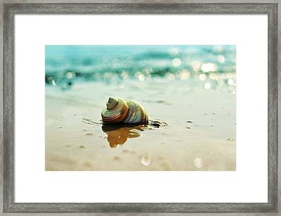 Pearly Shell Framed Print by Laura Fasulo