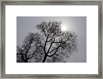 Pearly Silver Filigree On The Sky  Framed Print by Georgia Mizuleva