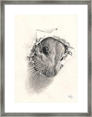 Peeckaboo Framed Print by Bianca Ferrando