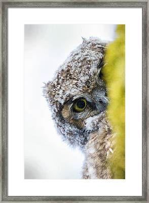 Peek A Boo Baby Owl Framed Print by Angie Vogel