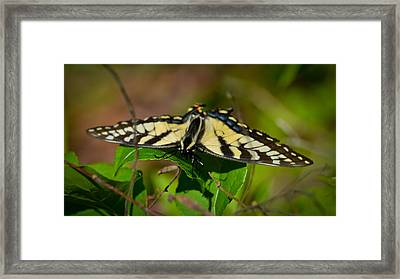 Peekaboo Framed Print by Mary Zeman