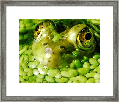 Peeping Through The Algae  Framed Print by Optical Playground By MP Ray