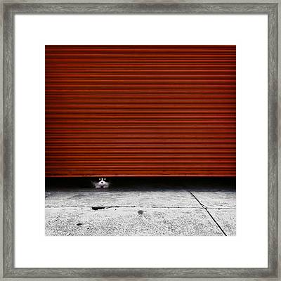 Peeping Tom Framed Print by Wolf Shadow  Photography