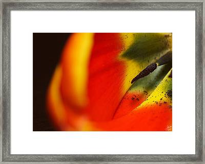 Peering Into The Heart Of A Tulip Framed Print by Lisa Knechtel