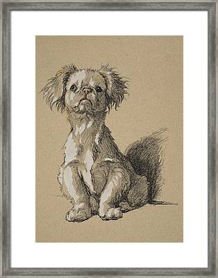 Peke, 1930, Illustrations Framed Print by Cecil Charles Windsor Aldin