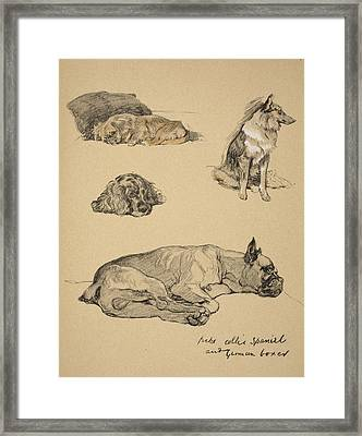 Peke, Collie, Spaniel And German Boxer Framed Print by Cecil Charles Windsor Aldin