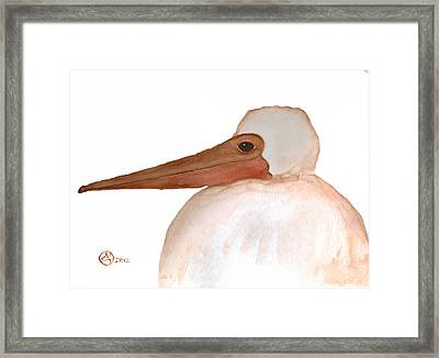 Pelican Chick Framed Print by Alexandra  Sanders