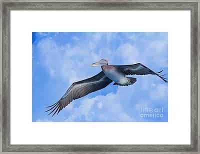 Pelican In The Clouds Framed Print by Deborah Benoit