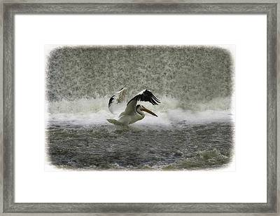 Pelican Landing In Color Framed Print by Thomas Young