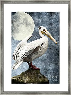 Pelican Night Framed Print by Angela Doelling AD DESIGN Photo and PhotoArt