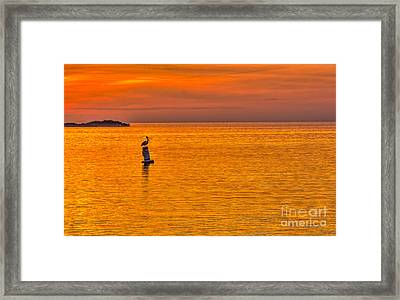 Pelican On A Buoy Framed Print by Marvin Spates