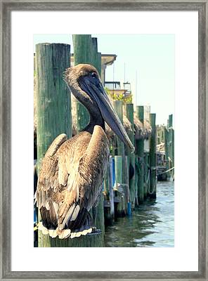 Pelican On A Post Framed Print by Dorothy Menera