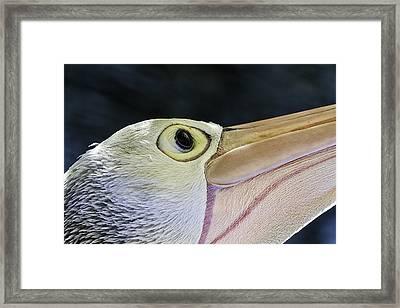 Pelican Portrait 2 Framed Print by Mr Bennett Kent