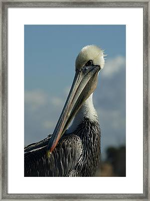 Pelican Profile Framed Print by Ernie Echols