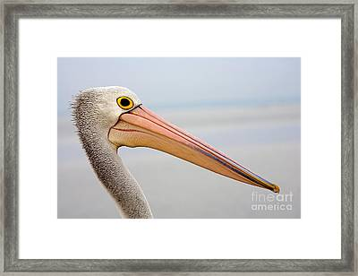 Pelican Profile Framed Print by Mike  Dawson