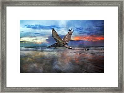 Pelican Sunrise Framed Print by Betsy Knapp