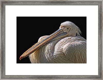 Pelicano Framed Print by Joachim G Pinkawa