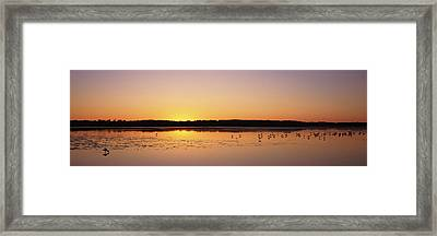 Pelicans And Other Wading Birds Framed Print by Panoramic Images