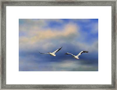 Pelicans At Sea Framed Print by Jai Johnson