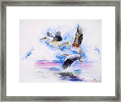 Pelicans Framed Print by Zaira Dzhaubaeva