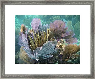 Pennekamp Bouquet Framed Print by Adam Jewell