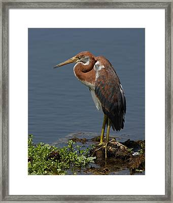 Pensive Framed Print by Dawn Currie