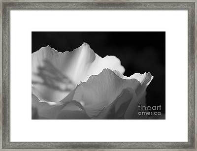 Peony Edges Framed Print by Terry Rowe