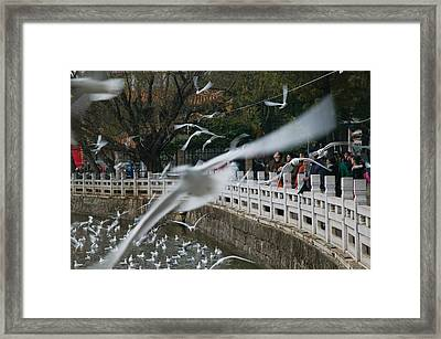 People Feeding The Gulls In A Park Framed Print by Panoramic Images