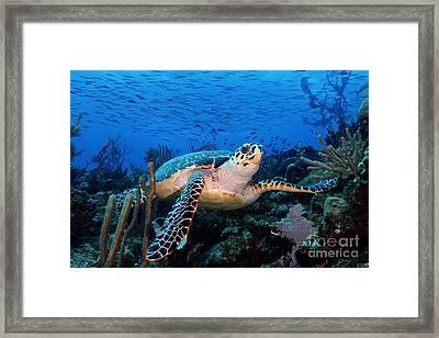 Pepe On Eldorado Framed Print by Carey Chen