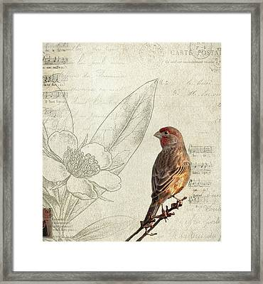 Perched Framed Print by Rebecca Cozart