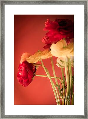 Perfctly Poised Framed Print by Jan Bickerton
