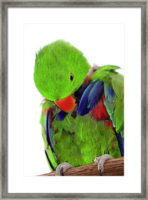 Perfect Bird Framed Print by Crystal Wightman