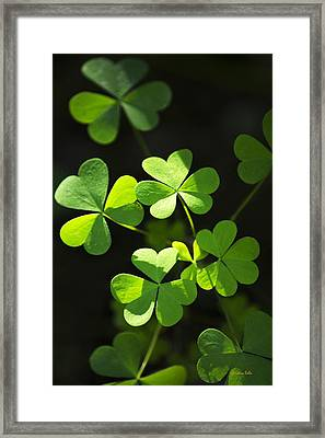Perfect Green Shamrock Clovers Framed Print by Christina Rollo
