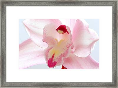 Perfect Imperfection Framed Print by Juergen Roth