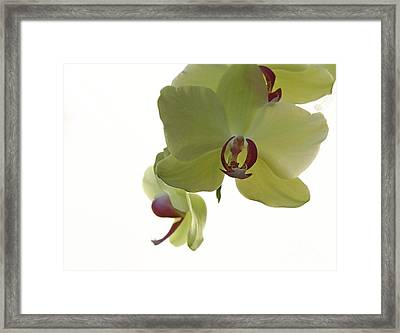 Perfect Moments Orchid  Framed Print by Inspired Nature Photography Fine Art Photography